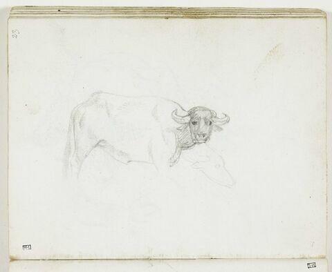 Un buffle, de profil vers la droite, la tête tournée vers le spectateur, et variante de profil de son museau