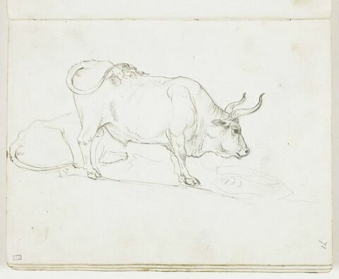 Deux taureaux, l'un allongé, l'autre debout, de profil vers la droite
