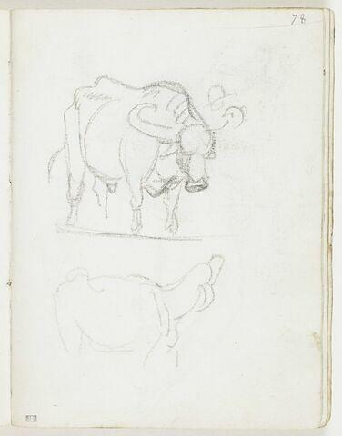 Un buffle, de trois quarts vers la droite, et esquisse d'une tête coiffée d'un chapeau (un éleveur ?) ; esquisse d'un autre bovin, de profil, vers la droite, la tête en arrière