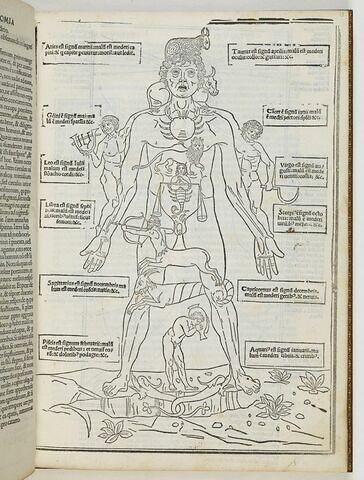 Tractatus tertius. Flobothomia