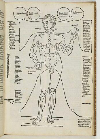 Tractatus septimus. De egritudinibus particularibus.