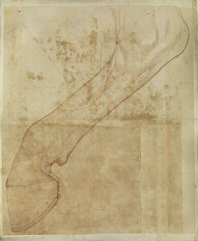 Bas de la jambe postérieure droite d'un cheval, levée